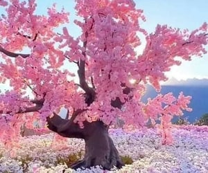 nature, pink, and view image