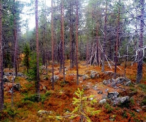 autumn, beautiful, and finland image