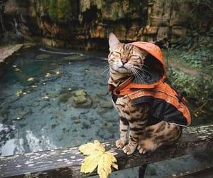 AUTUMN  CAT RAİN