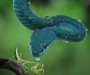 macro photography, photography, and wildlife photography image