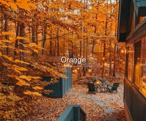 autumn, cold, and cozy image