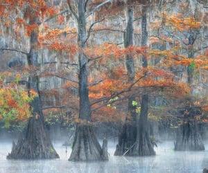 Fall colors, marsh