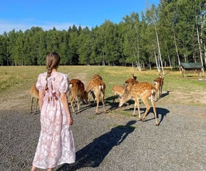 nature, summer, and cottagecore image