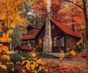 forest, nature, and architecture image