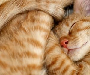 cats sleep positions image