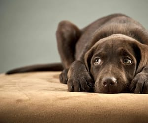 pain relief for dogs image