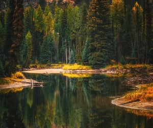 adventure, river, and forest image
