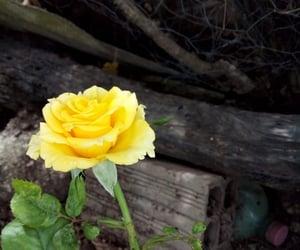flourish, bloom, and flowers image