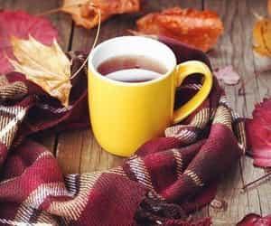 autumn, coziness, and autumnal image