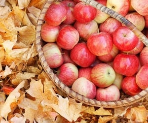 apples, article, and autumn image
