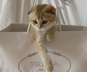 cat, bag, and tumblr image