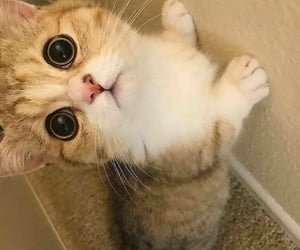 adorable, aww, and cat lover image