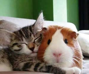 adorable, kitten, and sweet image