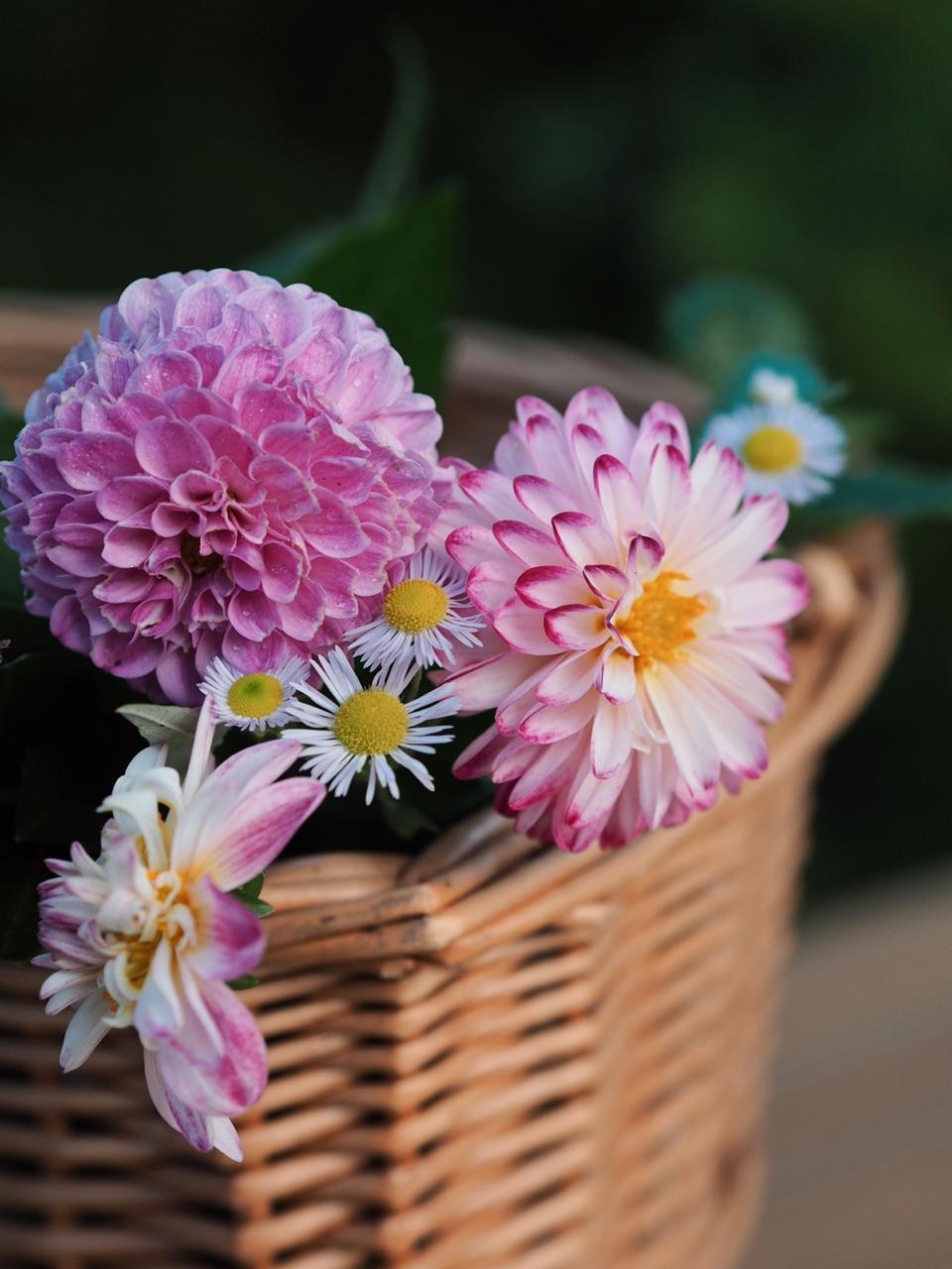 blumen, bouquet, and dahlia image