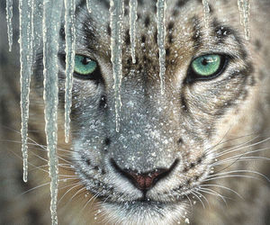 animal, ice, and nature image