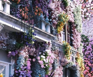 flowers, flowers blooming, and flower scenery image