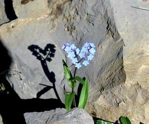 aesthetic, elegance, and flower bloom image