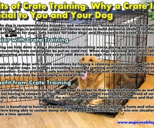 crate, dogs, and training image