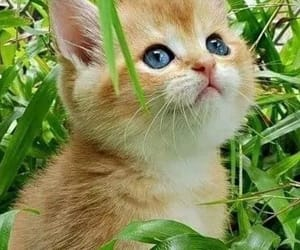 cat and pinterest image