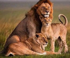 Lion Empire