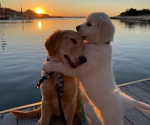 animal, astrophe, and dog image