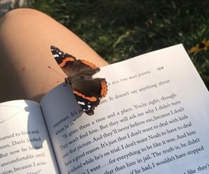 bibliophile, book, and butterfly image