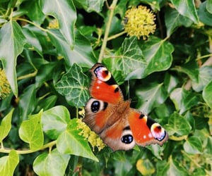 animal, butterfly, and nature image