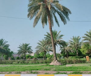 baghdad, green, and iraq image