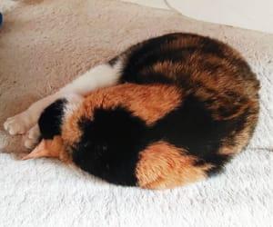 hug, cat, and instagram image