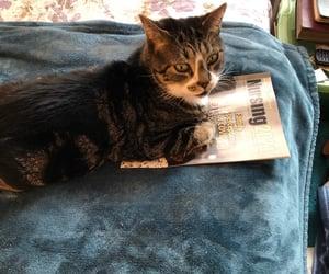 newspaper, animal, and cat image