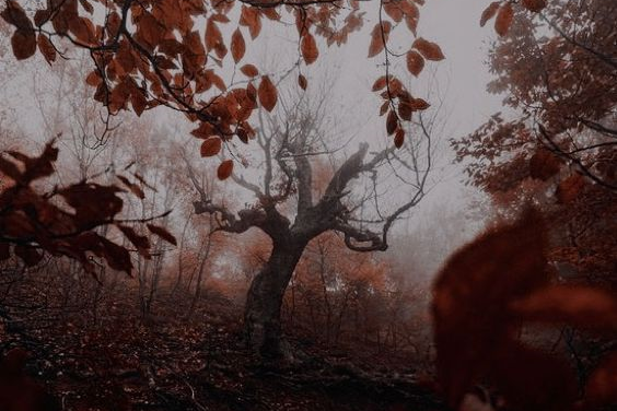 article, fall, and September image