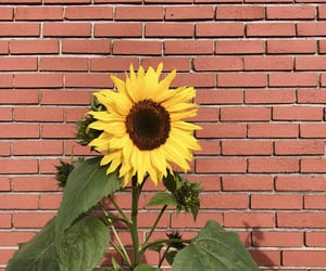 brick, summer time, and sun flower image