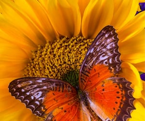 beautiful, butterfly, and 09.26.21 image