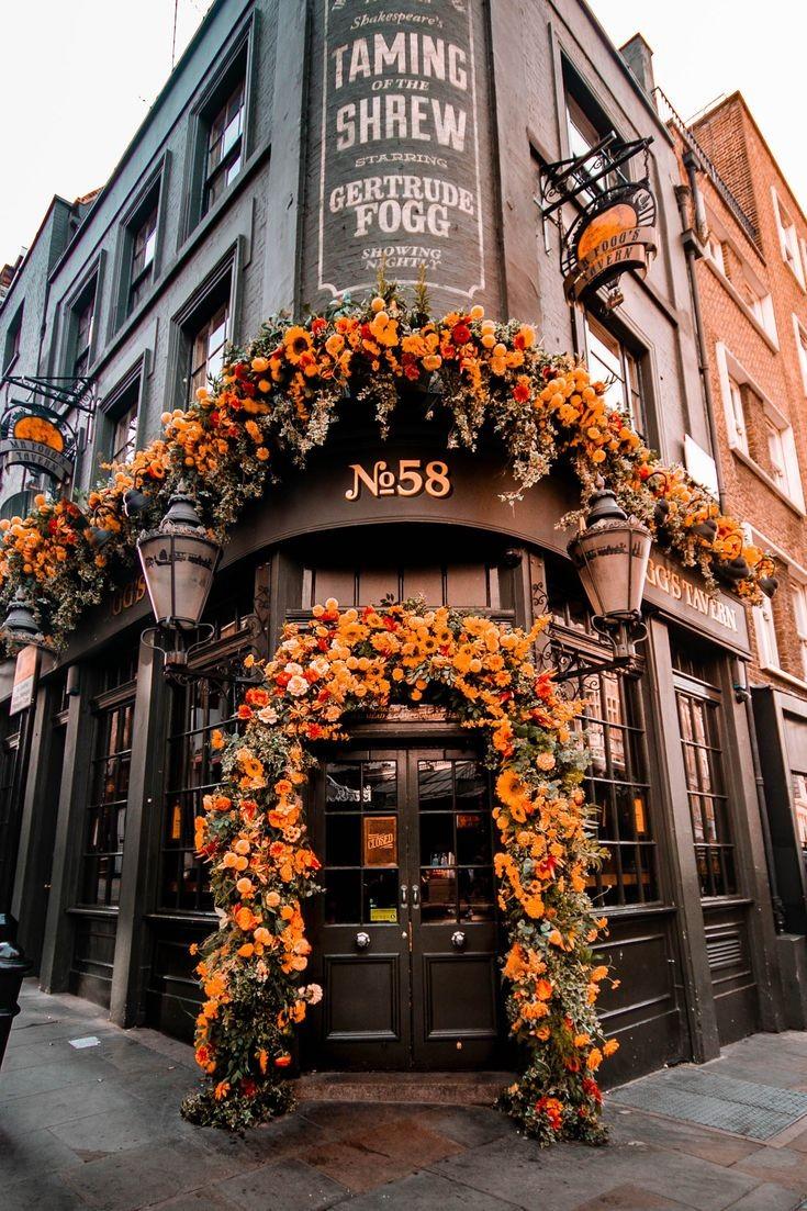 autumn, flowers, and orange image