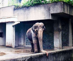 elephant, tokyo, and kanto image