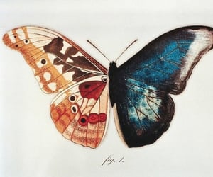archive, beige, and butterfly image