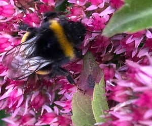 bee, fauna, and garden image
