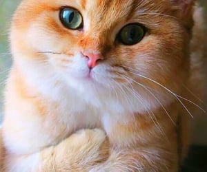 cats, meow, and cute cats image