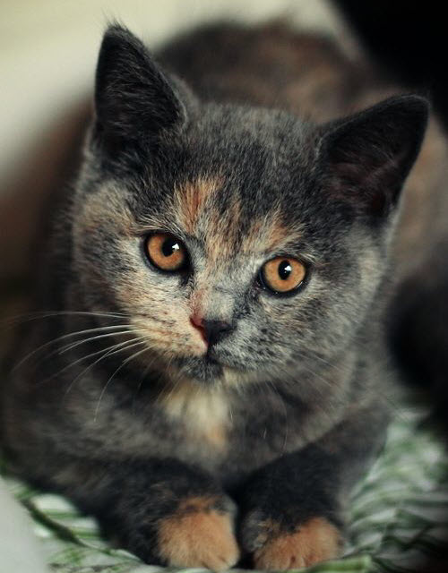 animals, meow, and cat image