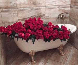 flowers, roses, and sweet scents image