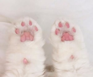 pink little paws
