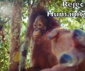 distorted, monkey, and ja image