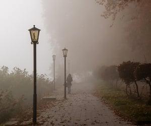 autumn, fall, and fog image