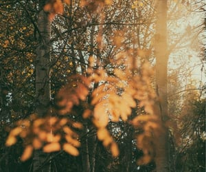 autumn, background, and beauty image