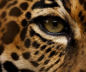 animals, leopard, and wild image