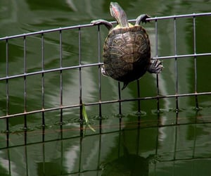 animal, turtle, and escape image