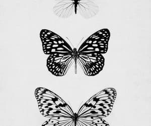 butterfly, art, and vintage image