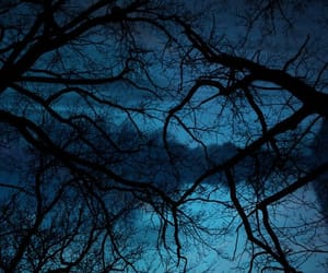 aesthetic, trees, and black image
