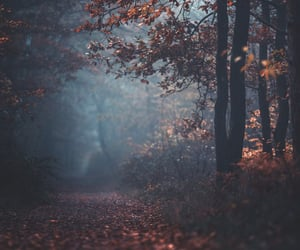 autumn, fog, and vertical image
