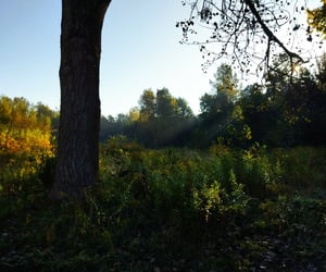 autumn, day, and Sunny image